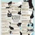 Kissan elämä. Kuvitus Aamulehteen